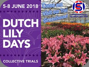 Dutch Lily Days 2017